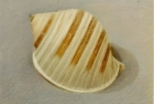 20 'Scotch Bonnet shell' pastel 18 x 20 cm 1994 (Private collection)