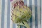31-cardoon-pastel-22-x-18-cm-1995