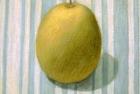 PSL04 'Gourd' pastel 20 x 25 cm 1994