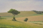 OL147-went-hill-near-east-dean-oil-on-canvas-17-5-x-35-cm-2007-private-collection