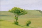 22 OL154 'Tree near Birling Gap' 20 x 25 cm oil on canvas 2009
