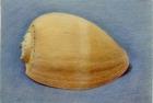 19 'Orange shell' pastel 24 x 34 cm 1994