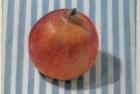 30-pomegranate-pastel-18-x-20-cm-1994