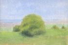OL081 'Tree study, Waldridge Fell' oil on cotton canvas board 13 x 17.5 cm 1988