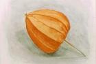 4 'Chinese lantern' watercolour 20 x 22 cm 1997